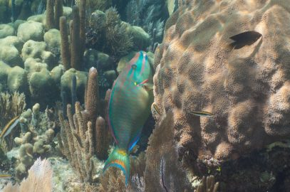 Learn all about Exotic Turneffe Atoll Belize 7/23/2020